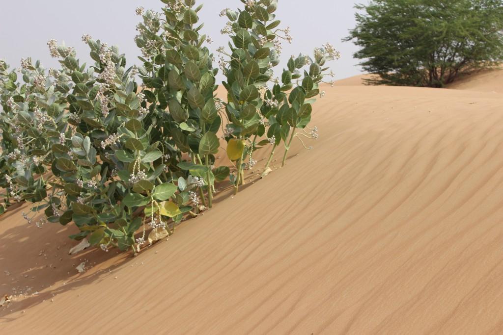 Ras Al Khaimah - das andere Dubai PEPPER AND GOLD